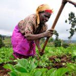 REVEALED: Volta region to host 2019 Farmers Day
