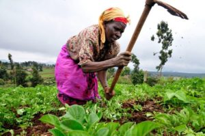 Despite low finance, agric topples industry again