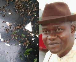PHOTOS: 'Mysterious' bees invade politician's house days after he won election petition