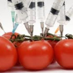 GMO foods are safe for humans and environment - Scientist