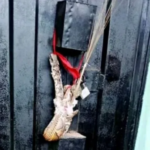 SHOCKING PHOTOS: Angry wife allegedly plants snake charm on husband's mistress shop