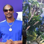 Snoop Dogg gets 48-joint weed bouquet for 48th birthday