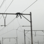 TRAGIC: Body of man found hanging on mash pole