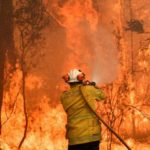 Bush fires ravage rice farms in northern regions