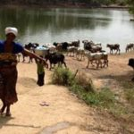 Atebubu: Water crises  forces residents to share water with animals