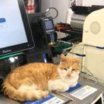 Supermarket cat defies Tesco ban
