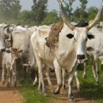 C/R: Four armed robbers arrested for stealing 60 cattle