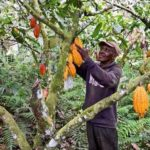 Cocobod to support Farmers fight soil acidity