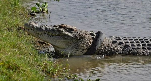 COVID-19: Man who breached Rwanda's lockdown 'killed by Crocodile'
