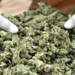 Narcotics Commission cautions public against paying monies to acquire license for 'wee' cultivation