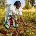 Farmers advised to increase their productivity