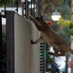 How animals are taking advantage of a World in Coronavirus Lockdown