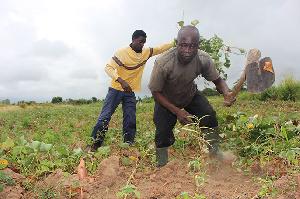 2m people to go hungry in Ghana if coronavirus disrupts crop season – AGRA