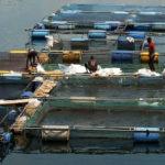 Asuogyaman gets fish processing factory