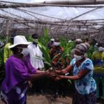 Suhum: Government supports farmers with 50,000 palm seedlings