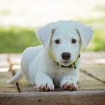 Ways to train your new puppy at home
