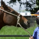 Costa Rica researchers turn to horses for coronavirus treatment