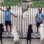 Viral: A Sikh boy's dance impresses two dogs and their reactions leave netizens in splits
