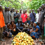 Cocoa pensions launched; 1.5 million farmers to benefit initially