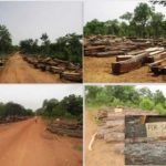 Why Ghana's Savannah Woodlands demand critical attention