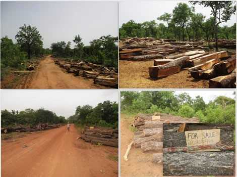Why Ghana's Savannah Woodlands demand critical attention