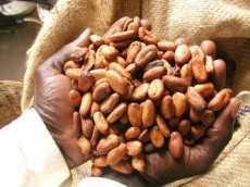 Ghana, Cote D'Ivoire take action on Security of Cocoa Farmers