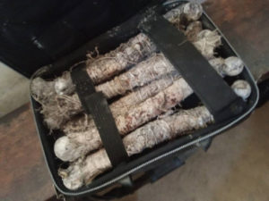 PHOTOS: Driver transporting human bones to fetish priest arrested