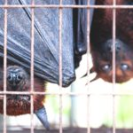 Covid-19: WHO calls for ban on sale of live wild mammals in food markets
