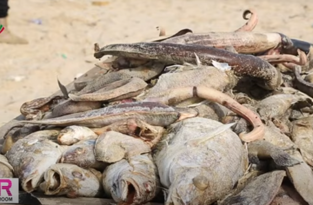 FDA retrieves some washed-ashore fish from the market