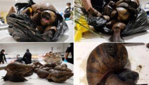 PHOTOS: US Customs seize snails, prekese, turkey berry at JFK Airport