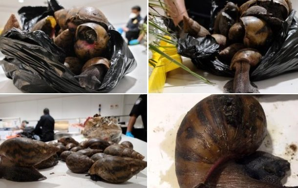PHOTOS: US Customs seize snails, prekese, turkey berry at JFK Airport