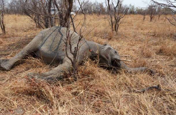 North East: Police search for persons who attacked, killed elephant in Wungu
