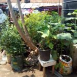 Ghanaians urged to explore urban gardening as viable option for generating extra income