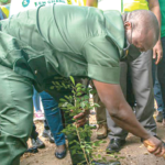 7 Million trees planted under Green Ghana project