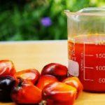Ghana palm oil goes digital