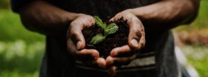 Nestlé invests CHF 1.2bn in regenerative agriculture