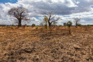 Africa needs $50bn a year for climate change fight